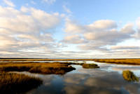 Salt Marsh Sanctuary II (HM)
