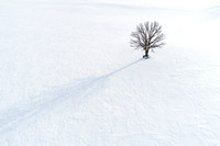 Lone Tree in Snow 1